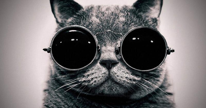 chat-spectateur